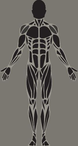 שריר הכתפיים: