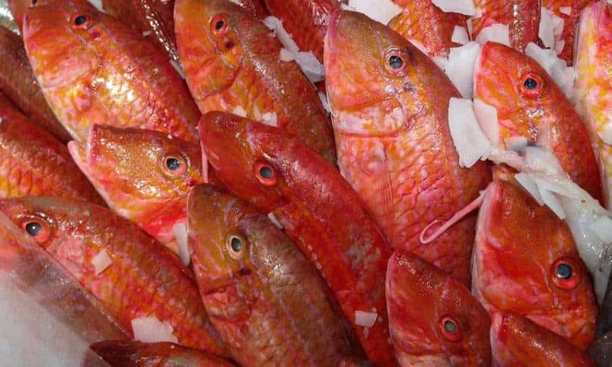 דג בורי ערך תזונתי